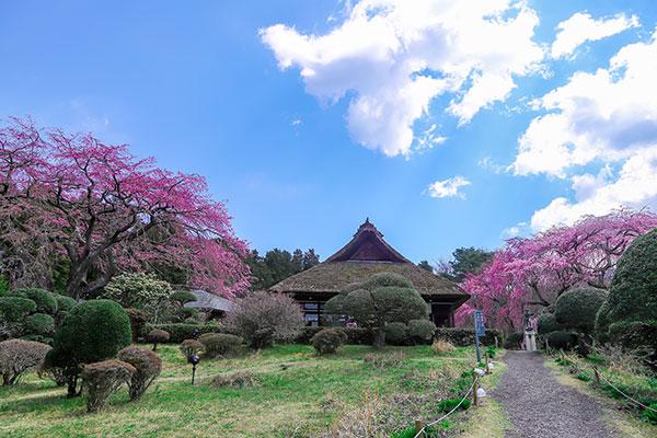 秩父宮両殿下が愛した母屋の茅葺屋根を修復し、伝統文化の継承と良好な景観創出を図りたい!