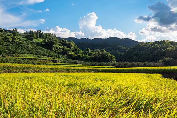 高齢化で田畑は荒廃し、過疎化が急速に進む。