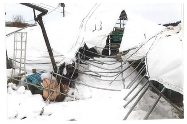 市内1,890棟の農業用ハウスが大雪で倒壊!農家を救う緊急支援プロジェクト