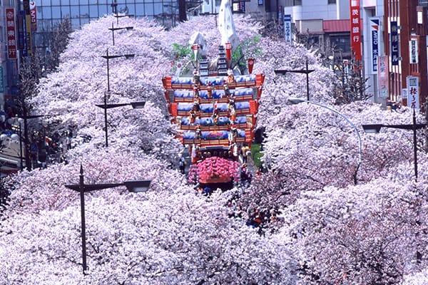 桜のトンネルを次の世代につないでいく!未来の子どもたちに「さくらのまち日立」の原風景を届けたい。