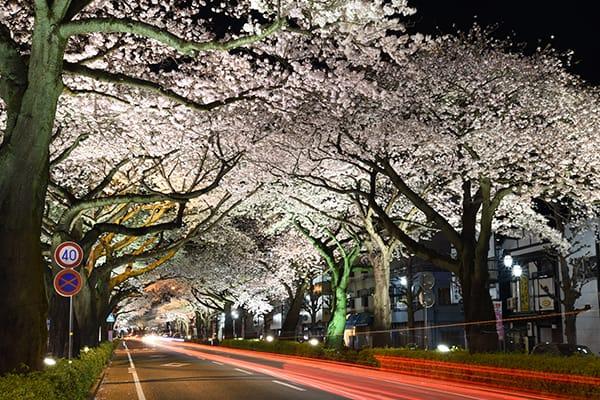 平和通り桜並木のライトアップ