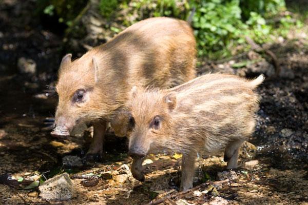 【第5弾】里山を保全し野生動物の命を守る~未来のためにいま私たちにできること~