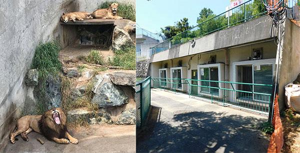 現在のライオン獣舎の様子
