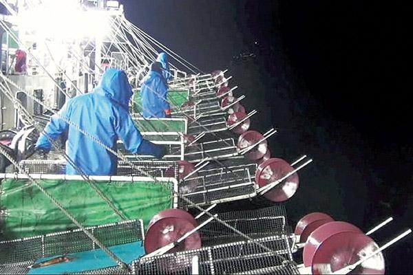 釣り上げたスルメイカは船上で急速冷凍するため鮮度抜群!