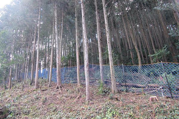 里山の整備を行い、人と野生鳥獣の共存が可能な環境を。