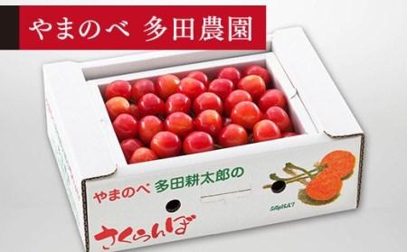 さくらんぼ 佐藤錦 バラ詰 Lサイズ 500g「やまのべ多田農園」 F2Y-1368