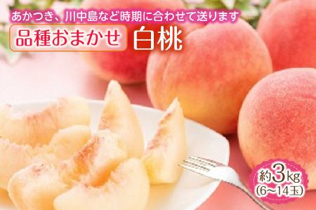 白桃 約3kg (6~14玉) 品種おまかせ F2Y-1345