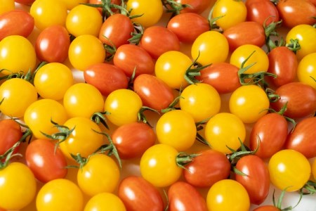 【2619-0040】水耕栽培トマト詰め合わせ