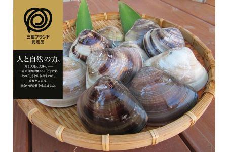 a_37 丸元水産 桑名産蛤(ハマグリ)0.9kg