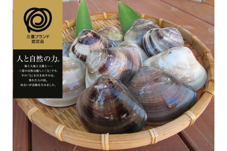 m_23 丸元水産 桑名産蛤(ハマグリ)1.4kg