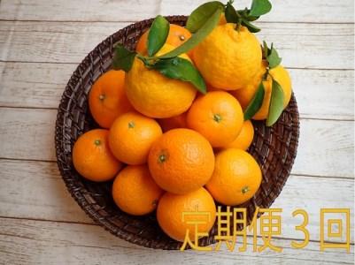 ②自然塾 季節の柑橘詰合せ【定期便3回】