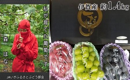 シャインマスカット・ピオーネ・クイーンニーナ 伊賀のおすすめ種なしぶどう 約1.4kg
