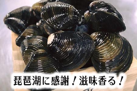 【琵琶湖に感謝!滋味香る!】 琵琶湖産 天然瀬田シジミ