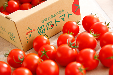 朝恋トマト(ミディトマト) 250g×6