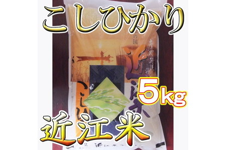 【新米】【30年産】近江米こしひかり5㎏ T019