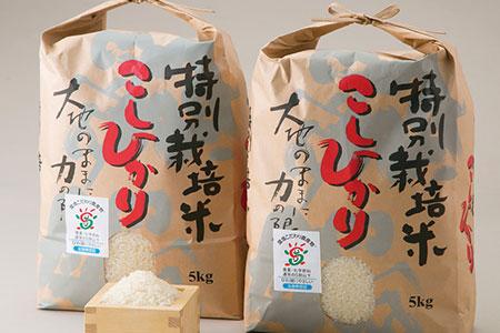 【T-521】よこいファーム 特別栽培米コシヒカリA