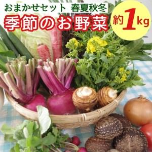 【期間限定】農薬不使用 京都亀岡野菜セット(伏見とうがらし・万願寺とうがらし・モロヘイヤ・空心菜など)