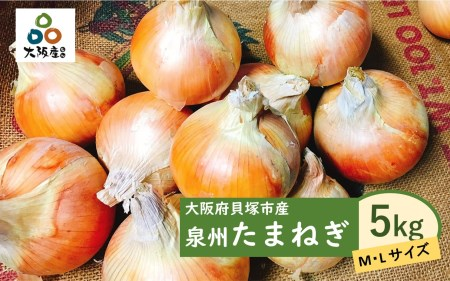 A0001.泉州玉ねぎ5kg 保存用ネット付