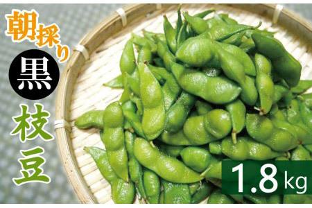 005A061 畑から直送・朝採り黒枝豆1.8kg