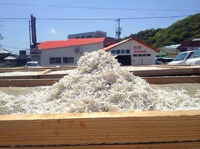 AR09◇淡路島 中原水産の「天日干しちりめんじゃこ」1kg