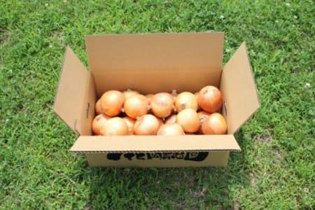 GF09◇淡路島産 無肥料・無農薬・自然栽培玉ねぎ 5kg