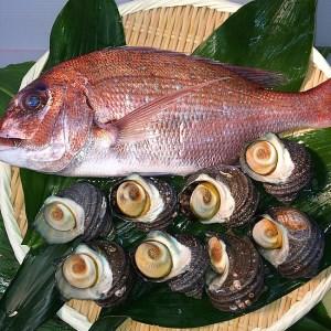 A056*淡路島産天然真鯛とサザエのセット
