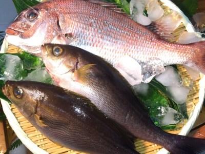 A059*淡路島産 天然真鯛と天然イサキのセット