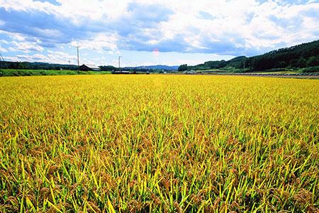 A010-22:今井農場あっぱれもち米10kg (精米)