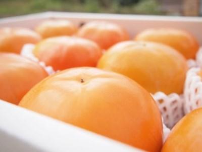 ケーズファーム最高級 富有柿