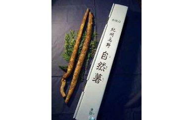 紀州山里の珍味自然薯