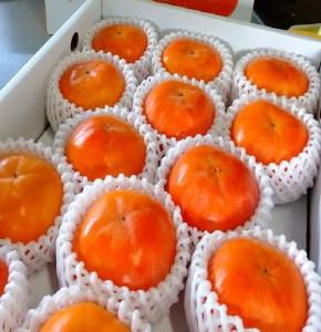 ケーズファーム最高級 富有柿(14個程度、Mサイズ)