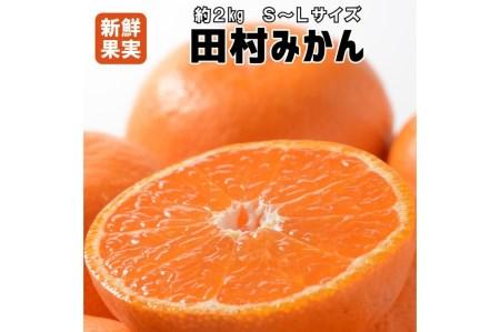 有田みかん最高峰「田村みかん」約2kg S~L【紀州グルメ市場】
