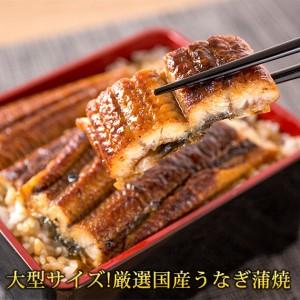 特大サイズふっくら柔らか 国産うなぎ蒲焼き 3尾【魚鶴商店】◆◆