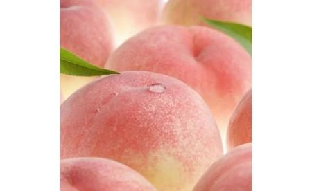 V6151_和歌山の桃 秀品 約3.8kg(サイズ・品種おまかせ)