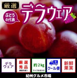 【新鮮果実】 ぶどう デラウェア 約2Kg 紀州グルメ市場