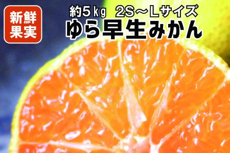 【有田みかん】≪極早生みかん≫人気のゆら早生 5Kg