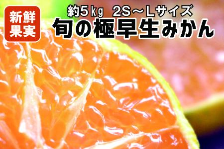 【有田みかん】 旬の極早生みかん 5Kg