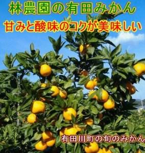 紀州和歌山 有田みかん5kg