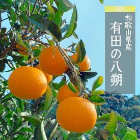 有田のはっさく 10kg S・Mサイズ