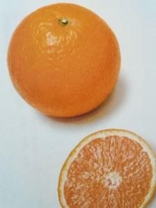 清見オレンジ10kg(M~LLサイズ混合)