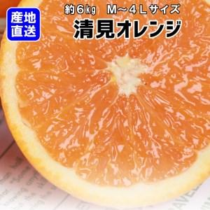 【産地直送】清見オレンジ 約7kg(S~2L)紀州グルメ市場