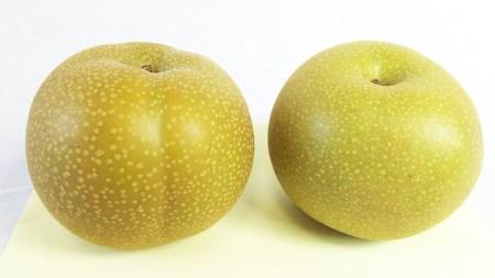 ジューシー果汁の梨(豊水) 約5kg(ご家庭用)