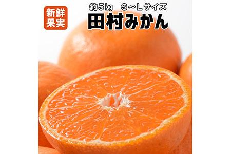 【有田みかんの最高峰】人気の田村みかん 5kg(S~L)紀州グルメ市場