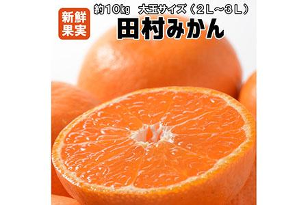 【有田みかんの最高峰】人気の田村みかん 10kg(2L・3L)紀州グルメ市場