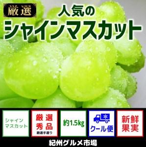 【新鮮果実】人気のシャインマスカット 約1.5Kg 紀州グルメ市場 ※北海道、沖縄、離島は発送不可