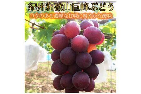 紀州和歌山産巨峰約800g【魚鶴商店】◆◆◆