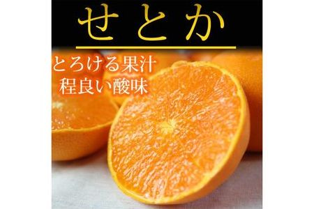 とろける食感!ジューシー柑橘 せとか 約2.5kg【魚鶴商店】