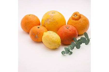<1月より発送>家庭用 旬の柑橘詰合せ6kg【詰め合せ・詰め合わせ】※北海道、沖縄配送不可◆【池田農園】