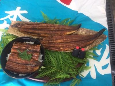 【2613-0031】国産の活鰻と地元の醤油で仕上げた絶品の蒲焼  1尾(1尾約220g前後)