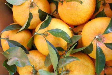 【2613-0038】低農薬で栽培した樹上完熟甘夏(採りたてを葉付で発送いたします。)
